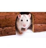 Wooden Hamster Igloo