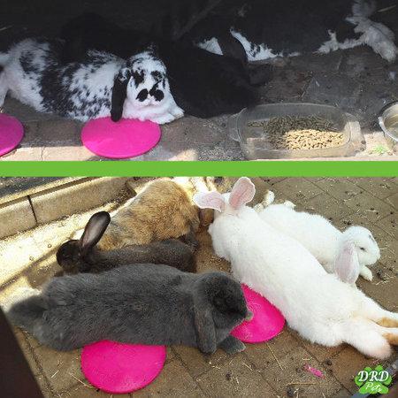 konijnen bij elkaar icepod