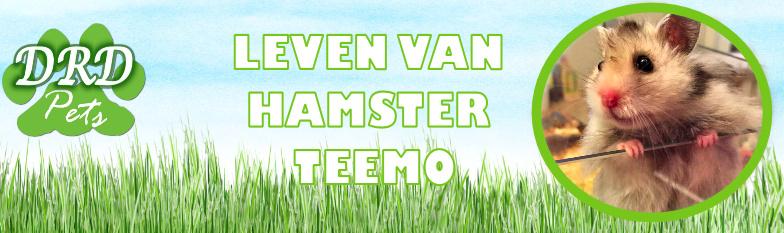 Hamster Teemo