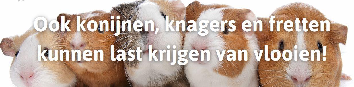 Ook konijnen, knagers en fretten kunnen last krijgen van vlooien!
