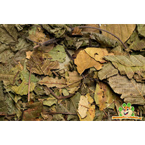 Lower tract Walnut leaf 80 gram