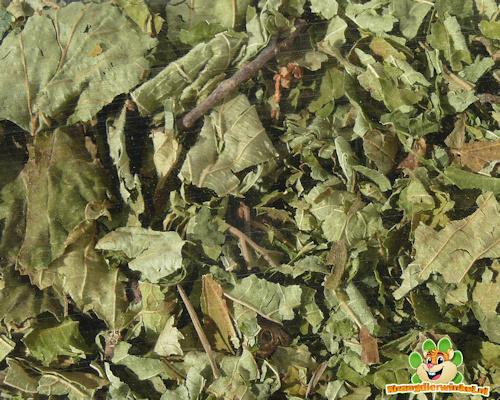 Knaagdierwinkel® Hazelnootbladeren