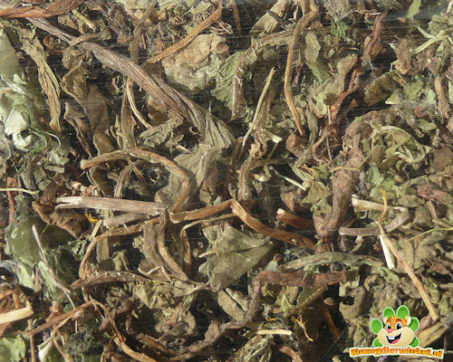 Nagertraum Paardenbloem Bladeren 100 gram