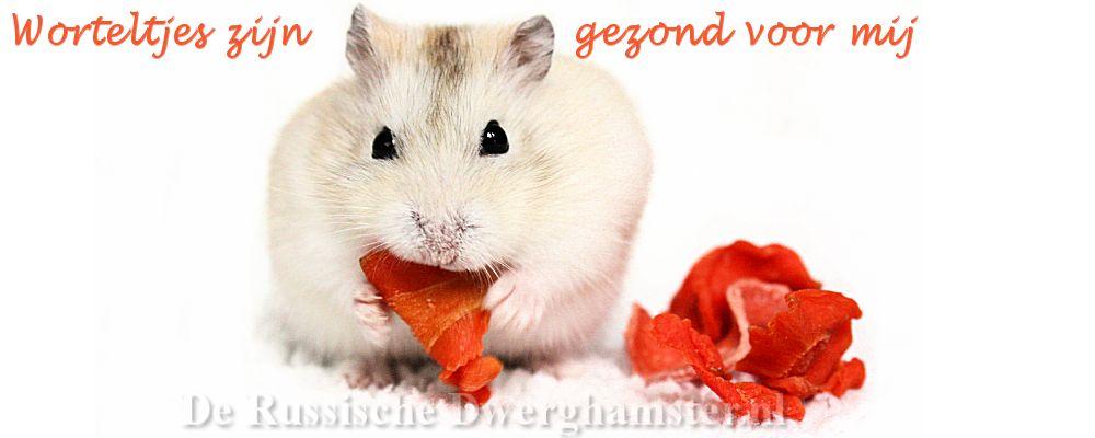 Hamsters en Wortels