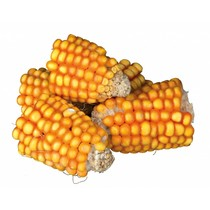 PUUR NATURE Corn cobs