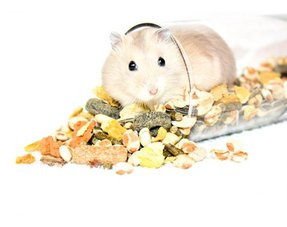Hamster transport