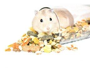 Hamstervoer