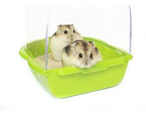 Hamsterpflege