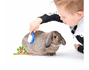 Kaninchenpflege