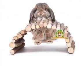 Kaninchenschalen und Leitern