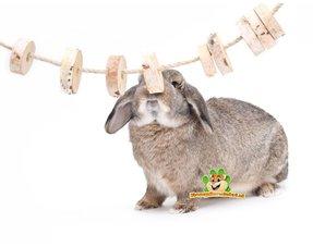 Kaninchen Nagen Material