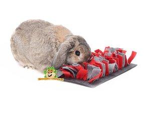 Kaninchen-Training