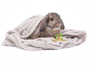 Kaninchen Nistmaterial