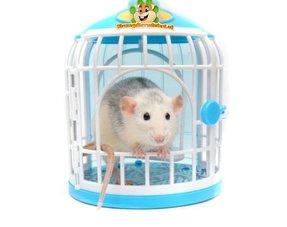 Ratten Spielzeug