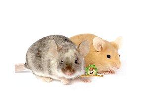Mäuse-Informationen