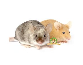 Mice Information
