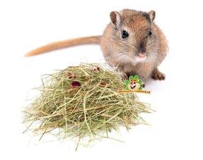 Gerbil Hay, Herbs and Seeds