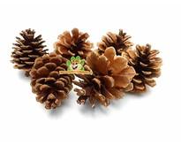Pine cone 6 pieces