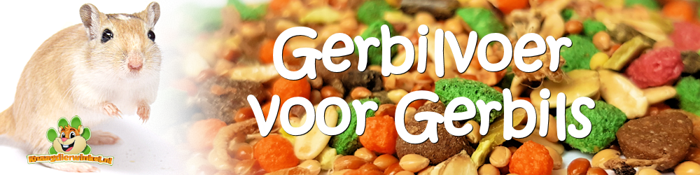 Gerbil food for your gerbil and gerbils