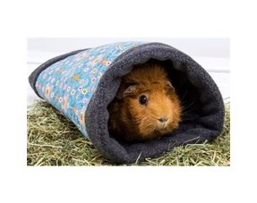 setting up a guinea pig's stay