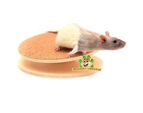 Ratten Laufräder
