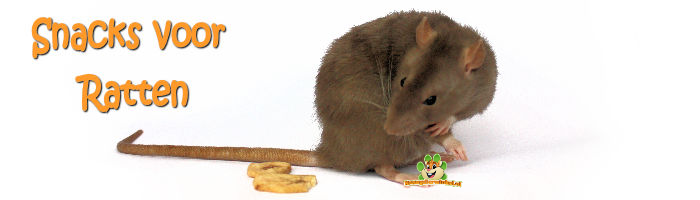 rat snacks for rats