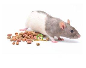 Rattenfutter