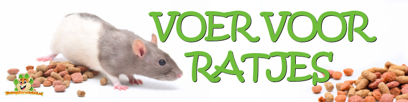 Food for rats