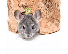 chinchilla cottages and houses for chinchillas