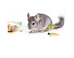 Chinchilla Snacks
