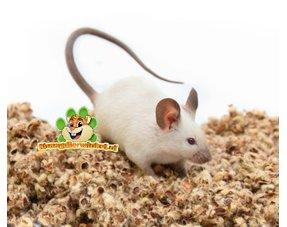 Mäuse Bodendecker