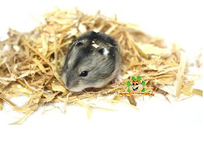 Hamster Hay, Herbs and Seeds