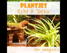 Knaagdier Planten