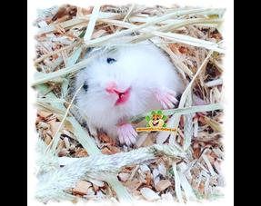 Hamster Kräuter und Samen