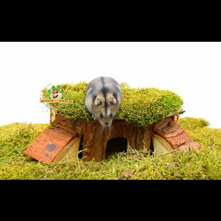 Trixie Corner house Thordis 21 cm