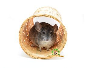 rodents and tunnels for rodents
