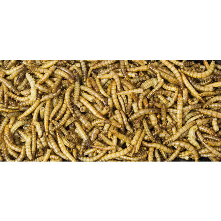 JR Farm Dried Mealworms 70 grams