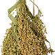 JR Farm Feather millet