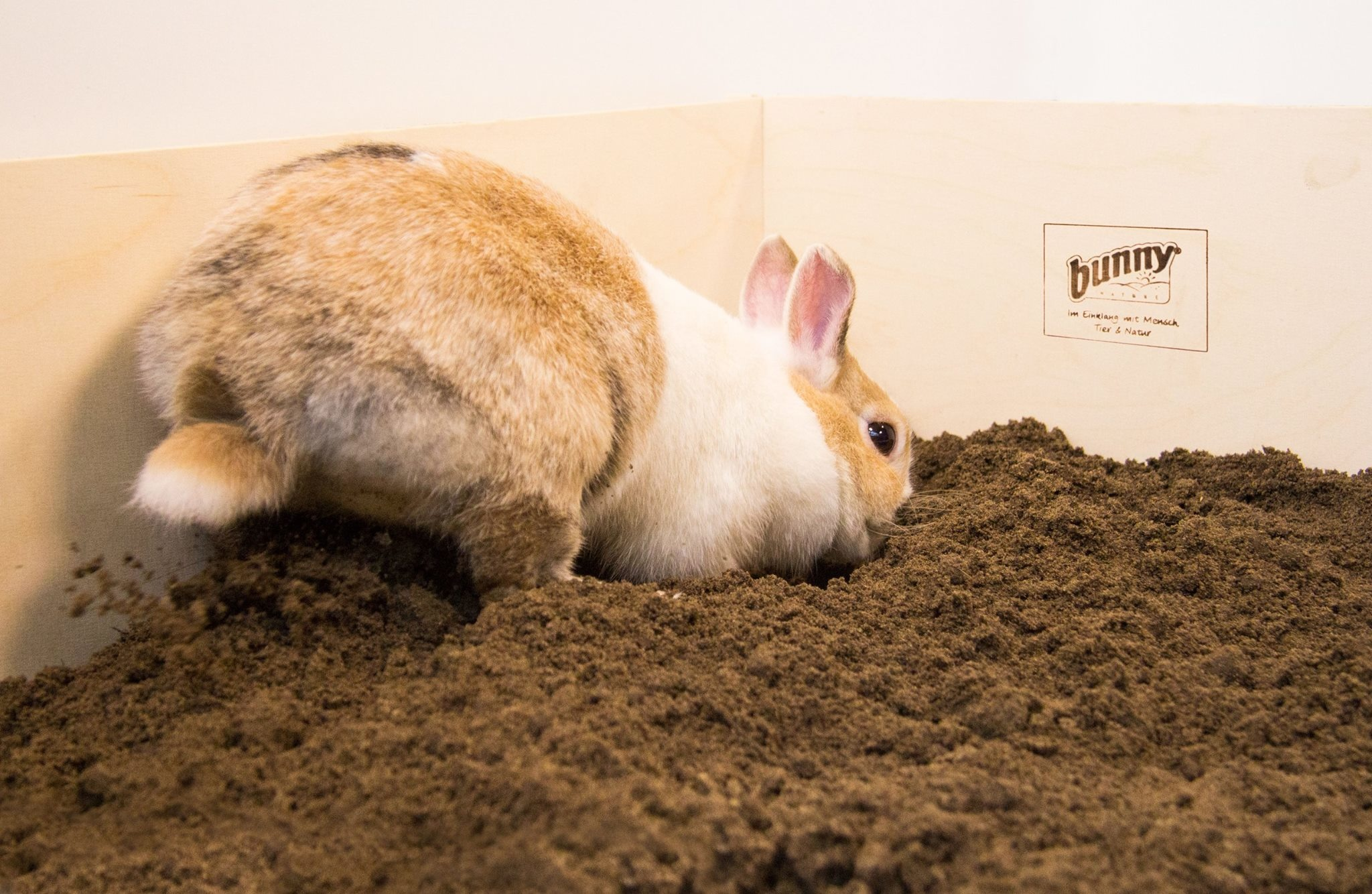 konijnen zandbak