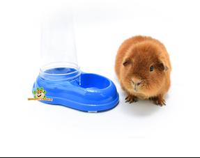 Trinkflaschen & Wassernäpfe für Meerschweinchen