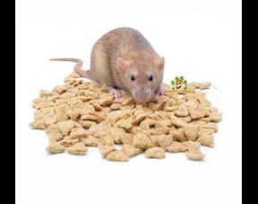 Ratten nagendes Material