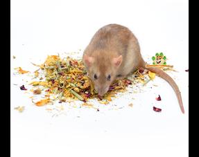 Rat food