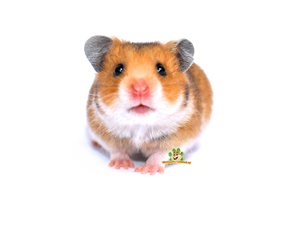 hamster webshop for hamsters