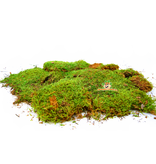 Trixie Dried Moss 200 grams
