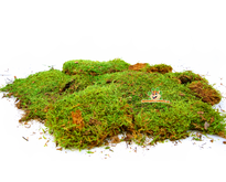 Dried Moss 200 grams