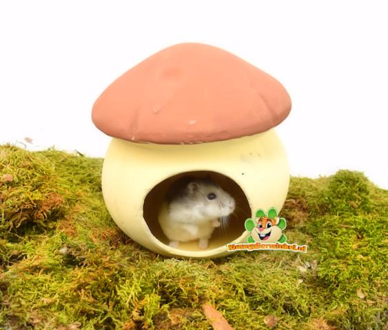 Terracotta Mushroom Cottage 17 cm