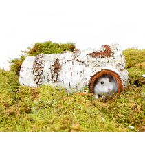 Tree trunk Igloo birch
