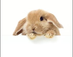 Kaninchen-Bücher