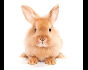 Kaninchen Informationen