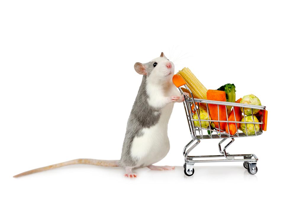 fysiek winkelen bij drd knaagdierwinkel